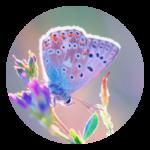 Schmetterlingsfoto-Logobild als Symbol für Transformation, Link zur RPT-Infoseite