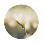 Foto einer Raupe als Symbol für Reisekosten | Preis einer Coaching-Sitzung